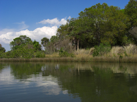 Clam Bayou nature Park in Gulfport and St. Petersburg, Florida